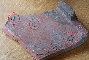 2000年前のイギリスのレンガについた猫の足跡