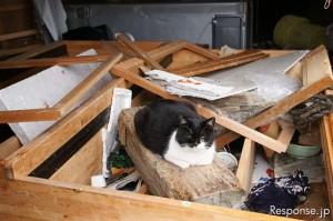田代島倒壊家屋の瓦礫に乗る猫