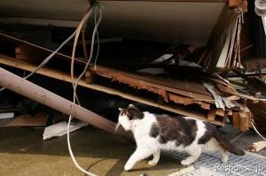倒壊家屋を見る猫