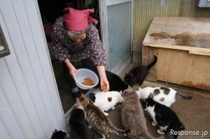 おばあちゃんに餌を貰う猫たち