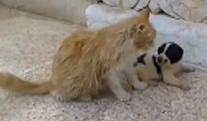 空爆が続くシリアの猫が子犬を保護していた
