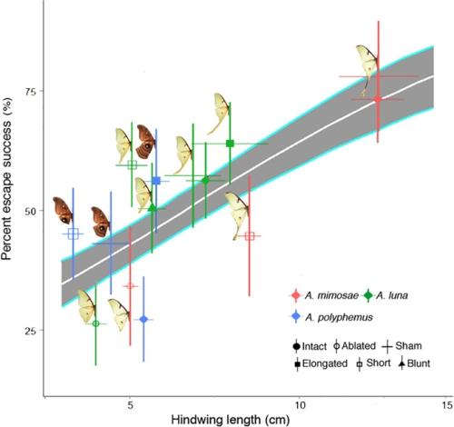 蛾は蝙蝠の超音波を欺く羽根を持っていた