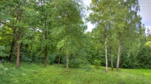 林の1年を定点撮影してみた