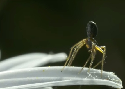 蜘蛛は静電気力で空を飛んでいた