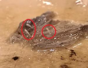 イカの精嚢を食べると口内に針が刺さる激痛が走る