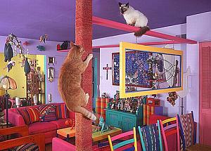 自宅を9匹の猫の為に改装