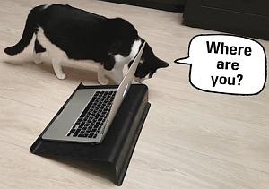 パソコンで飼い主の声を届けると猫はどうするか