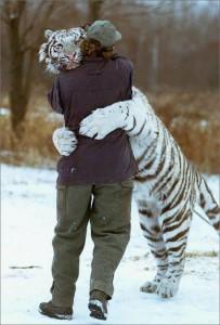 白虎との抱擁
