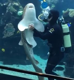 お腹を撫でて欲しいトラフザメ